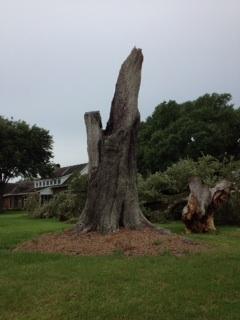 Fallen Oak (3/3)