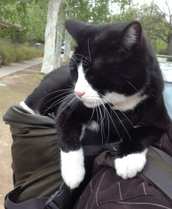 Critter relaxes atop his owner's backpack.