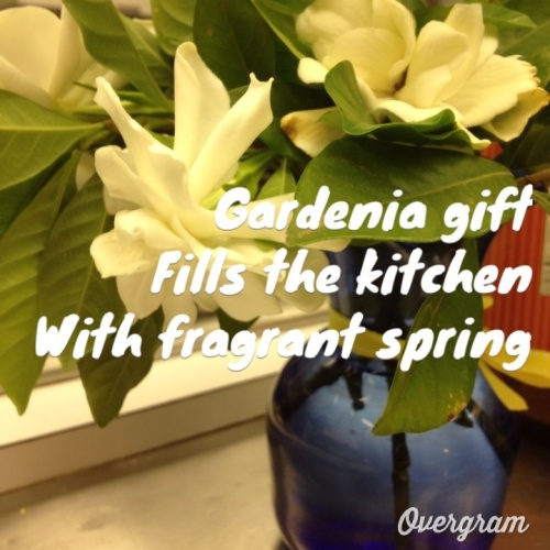 gardenia gratitude