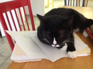 Mimi naps on a poem.