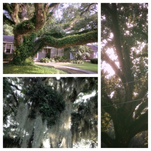 Neighborhood Oaks photo collage by Margaret Simon