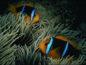 Chuck Savall  coral.org