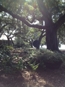 A huge gong hangs from an old oak tree.