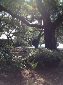 A huge gong hangs from an old oak tree.