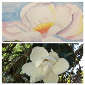 Magnolia, magnolia