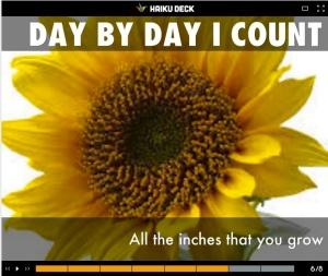 Vannisa Choka Sunflower