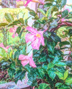 Mom's mandevilla reworked in painteresque.