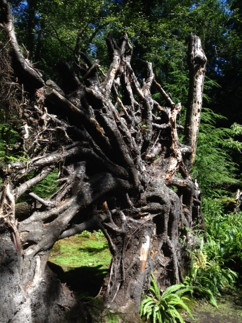 Even the root of the fallen hemlock becomes sculpture through God's eyes.