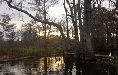 Canoeing through the trees in Lake Martin.