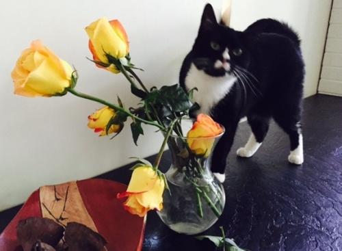 Mimi wants to eat my roses.