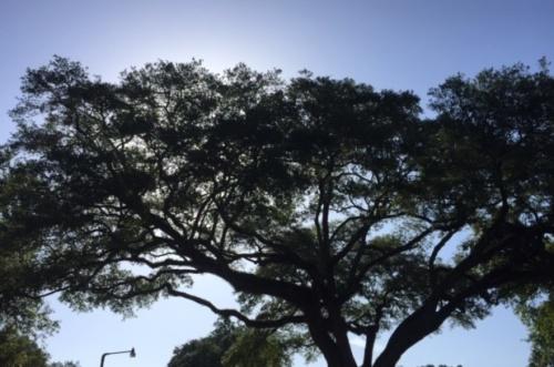 sky with tree