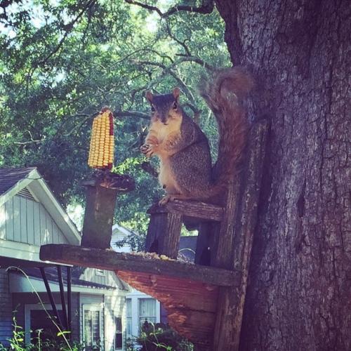 Awkward squirrel