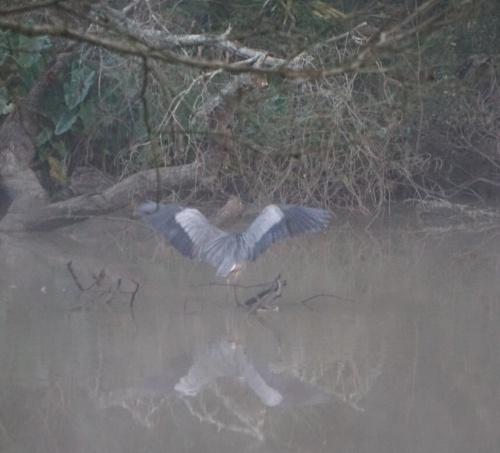 Blue heron wings, Margaret Simon