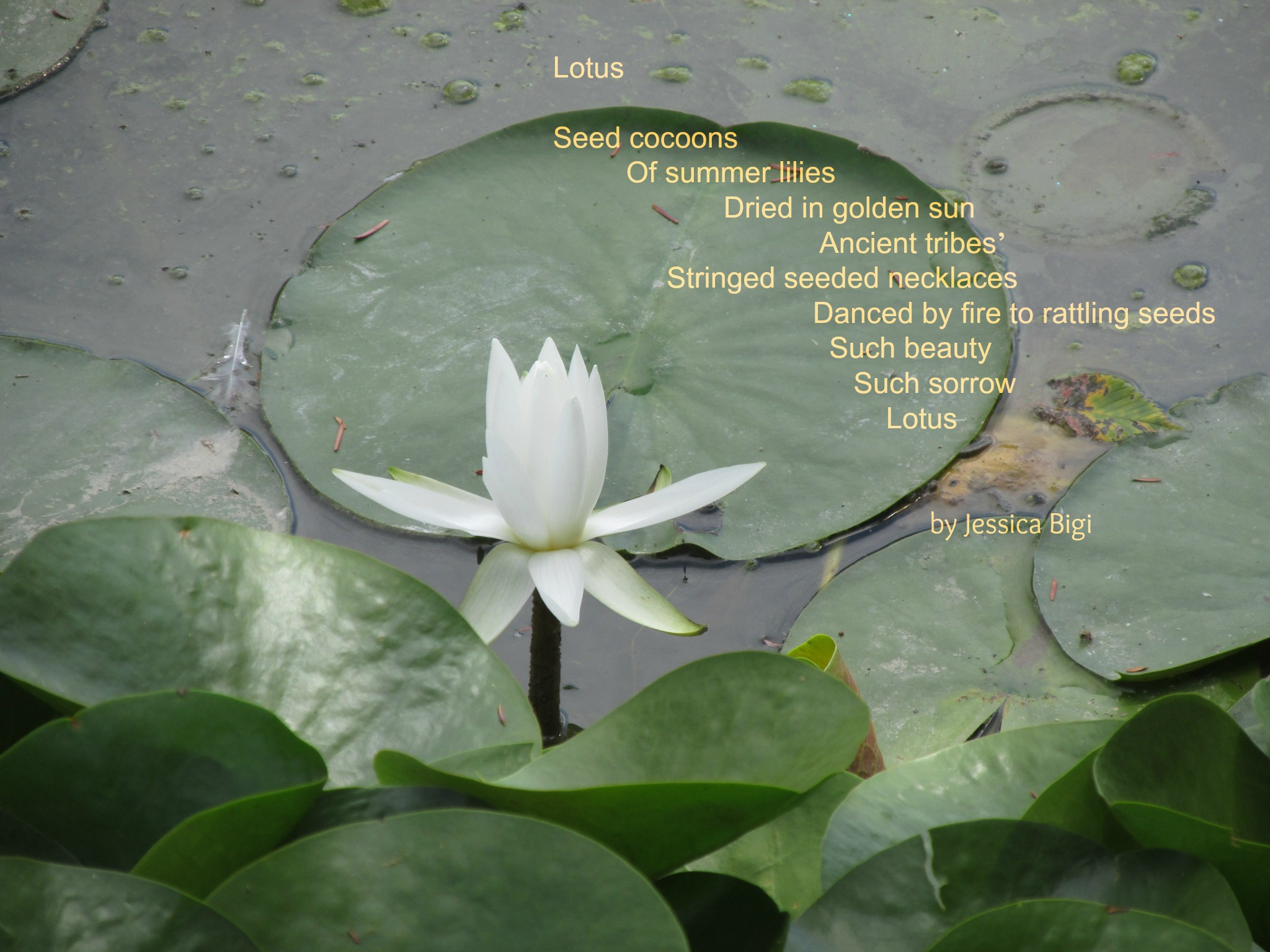 Bio Poem Reflections On The Teche