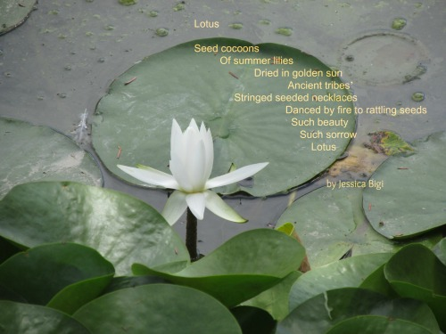 Photo and poem by Jessica Bigi, all rights reserved.