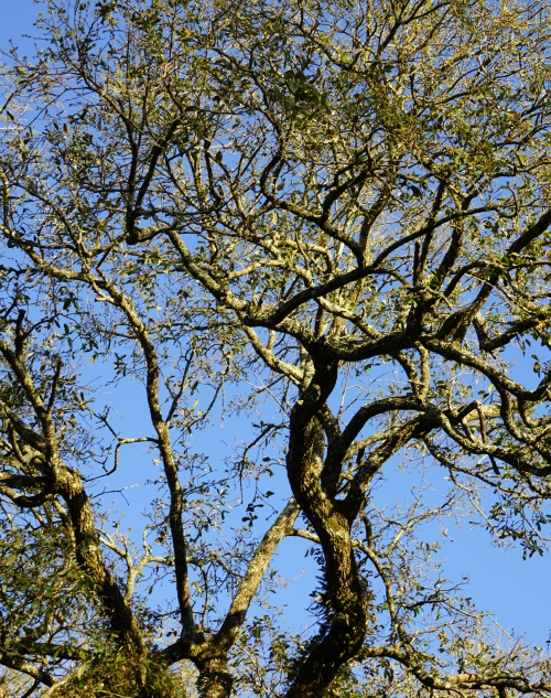 Branches high and small open to the blue of sky.
