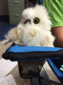 snowy owl stuffed
