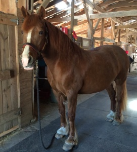 Julie's horse Abbie