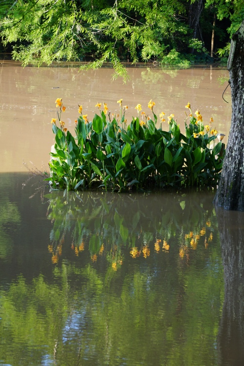 Reflections in the flood by Margaret Simon