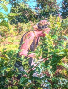 A Painteresque view of me picking blueberries.