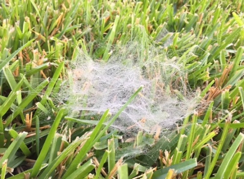 grass-web