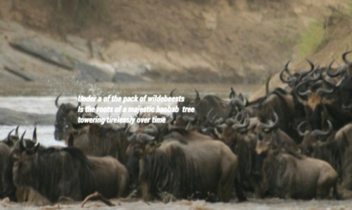 Andrew's slide features the wildebeests of the African savanna with a connection to the ancient boabab trees.