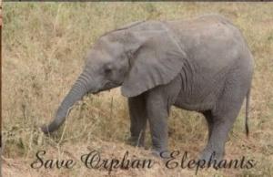 baby-elephant-poster