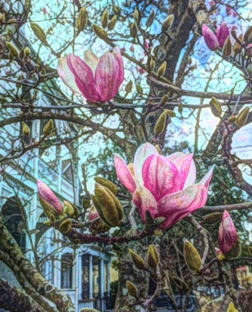 japanese-magnolia-paint