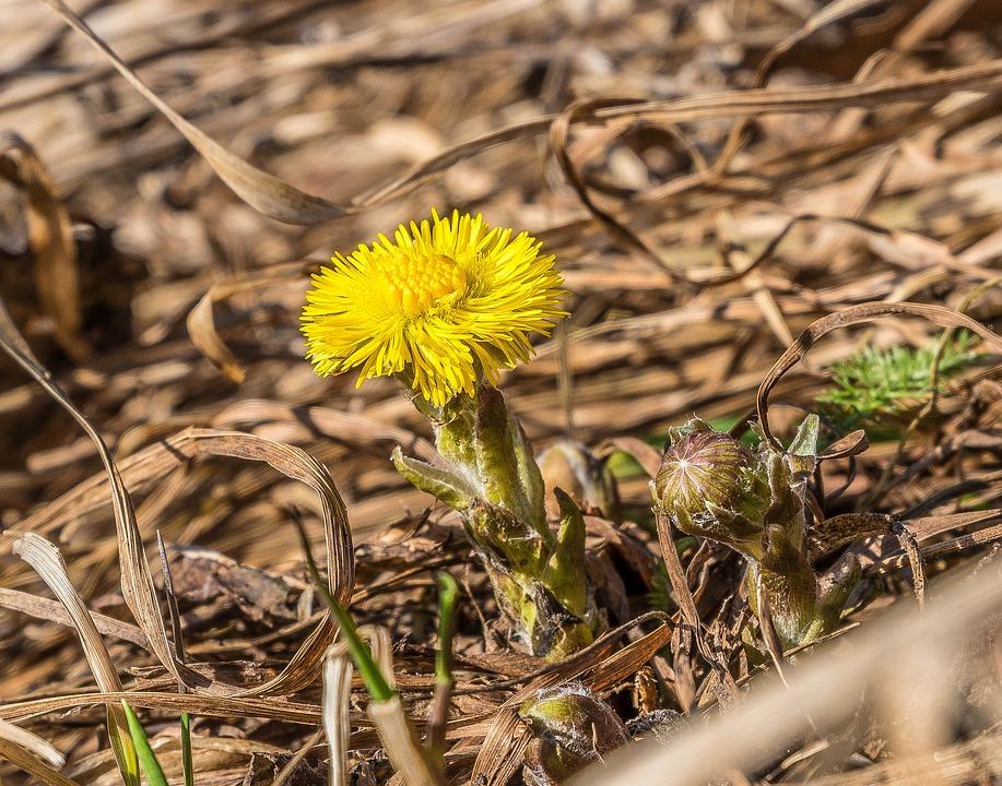spring-2213359_960_720